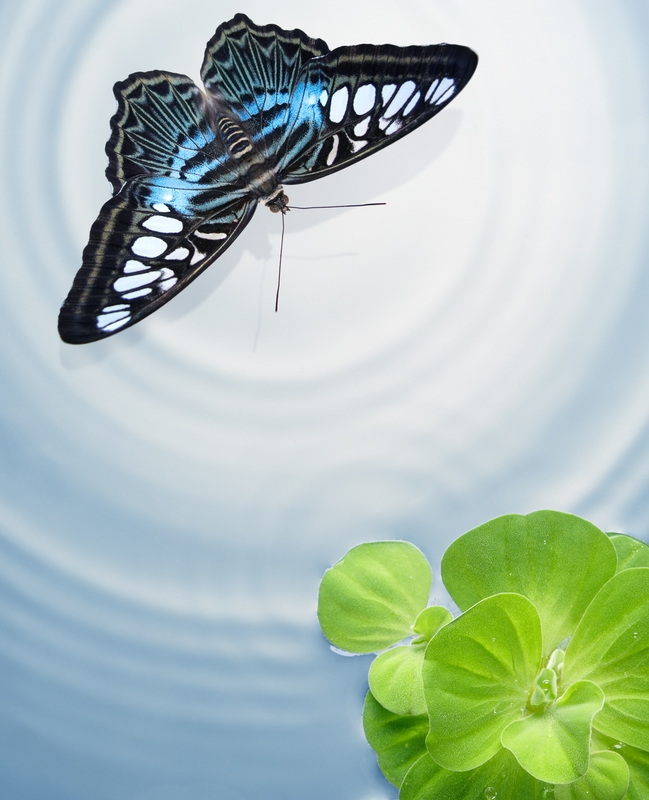 Butterfly Good